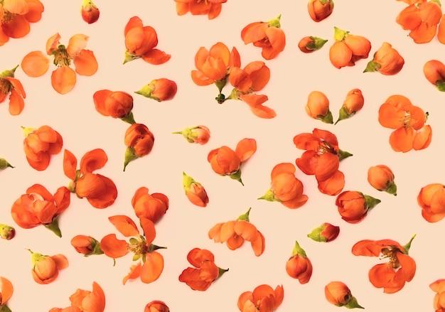 Sfondo pastello caldo creativo di delicati fiori di mela cotogna primaverile o motivo floreale senza cuciture
