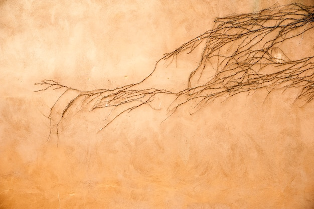 Creeper su un muro