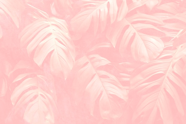 Sfondo con motivo a foglia di monstera rosa crêpe