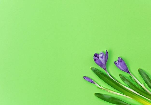 Croco su uno sfondo verde