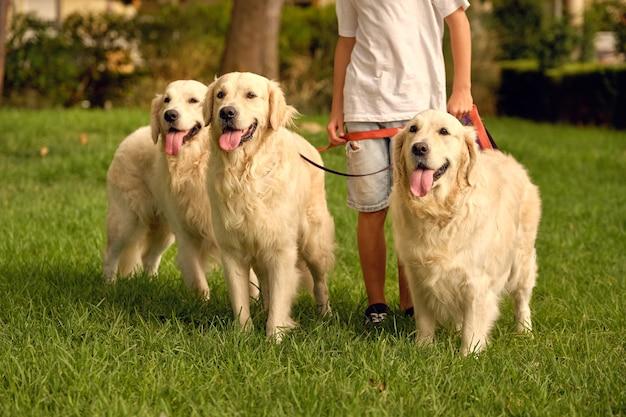 Ritaglia bambino con muta di cani al guinzaglio