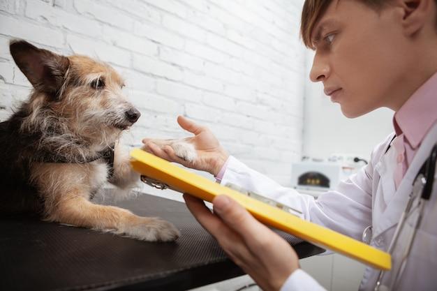 Ritagliata da vicino di un veterinario maschio che tiene la zampa di un simpatico cane di razza mista rifugio
