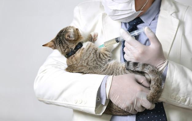 L'immagine potata del veterinario maschio di medico con lo stetoscopio sta tenendo il gatto grigio sveglio sulle mani alla clinica del veterinario