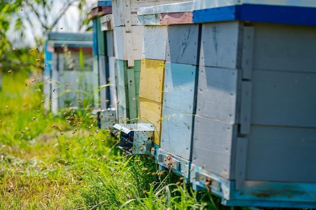 Foto ritagliata degli alveari su sfondo verde erba. api e concetto di miele. alveari colorati e cielo blu sopra.