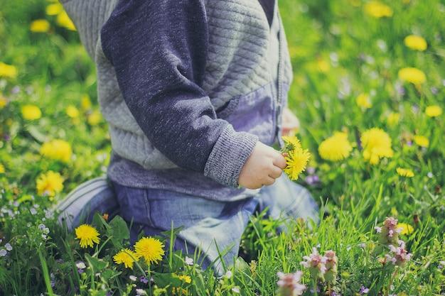 Foto ritagliata del ragazzino che tiene il fiore giallo nel campo. bambino seduto nel prato primavera tarassaco e erba verde.