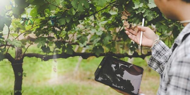Il giovane agricoltore del colpo ritagliato sta usando un tablet del computer mentre si trovava tra il frutteto