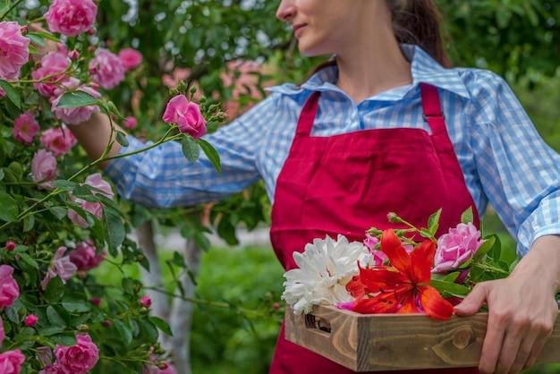 Vista ritagliata giovane donna che esamina la rosa in fiore. giardinaggio primaverile ed estivo.