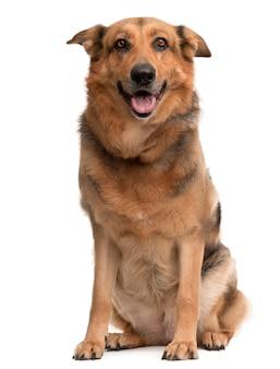 Cane di razza incrociata, 1 anno di età, seduto di fronte al muro bianco