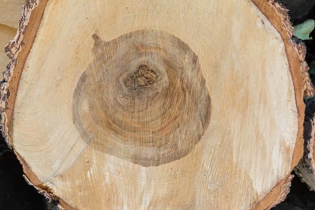 Taglio trasversale di un tronco d'albero di betulla