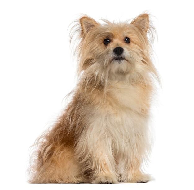 Dog sitter dell'incrocio