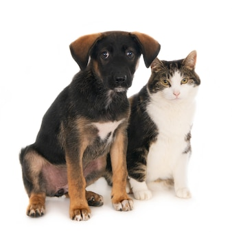 Cucciolo di cane dell'incrocio che si siede parallelamente con l'amico del gatto. isolato su bianco