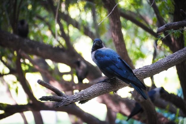 Immagini di corvo sull'albero: concetto di animali e uccelli