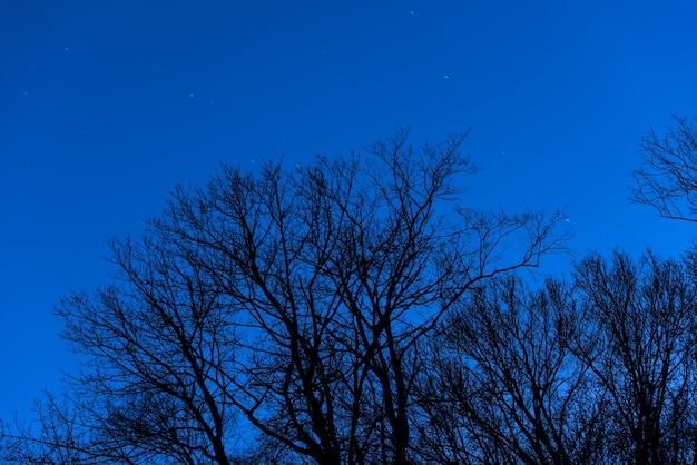 Corone di alberi su uno sfondo di cielo stellato