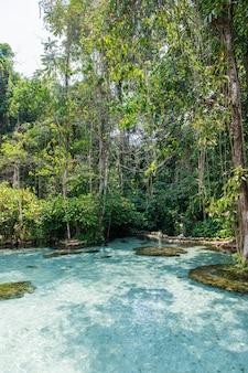 Acqua cristallina nella foresta spartiacque di ban nam rad a surat thani