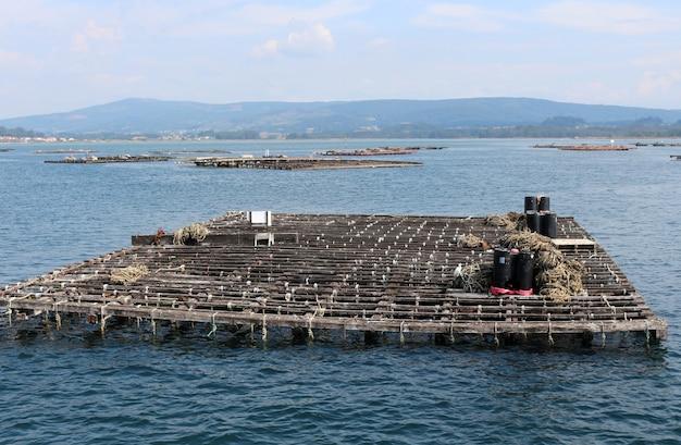 Coltivazione di cozze e ostriche, piattaforma semisommersa coltivazione marina batea, o'grove, galizia, spagna