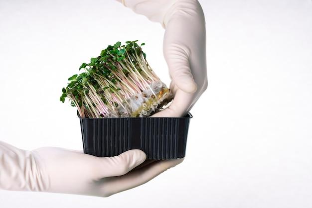 Coltivazione di microgreens di ravanello