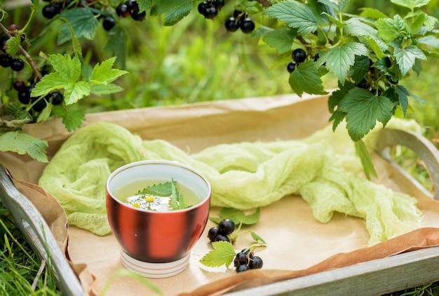 Tazza di tè verde con una foglia di menta, fiori, nel giardino.