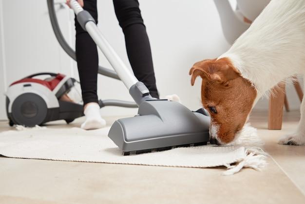 Il cane curioso esamina l'aspirapolvere