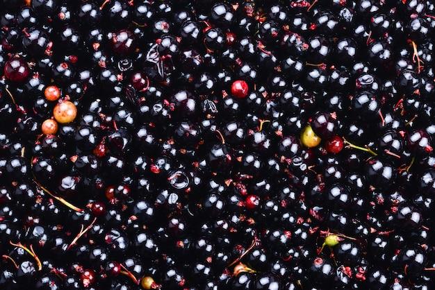 Ribes nero. frutti di bosco ecologici per dolci, frullati o marmellate. bacche biologiche di ribes.