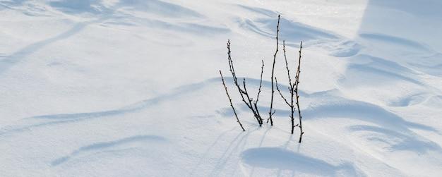 Cespuglio di ribes in giardino sotto la coltre di neve, giardino d'inverno