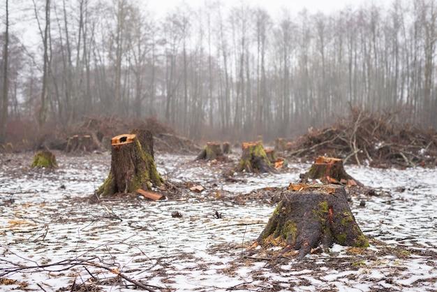 Tagliare l'area della foresta nel bosco