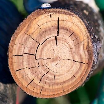 Taglio di un albero vicino dettaglio