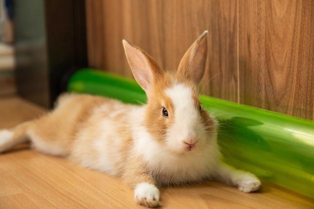 Simpatico coniglietto di 3 mesi sul pavimento