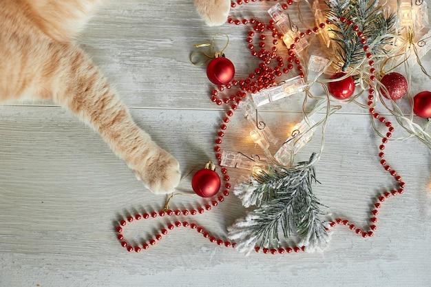 Una bella zampa di gatto britannico adorabile che gioca con le palle di natale a casa, ornamenti di natale, gatto di natale