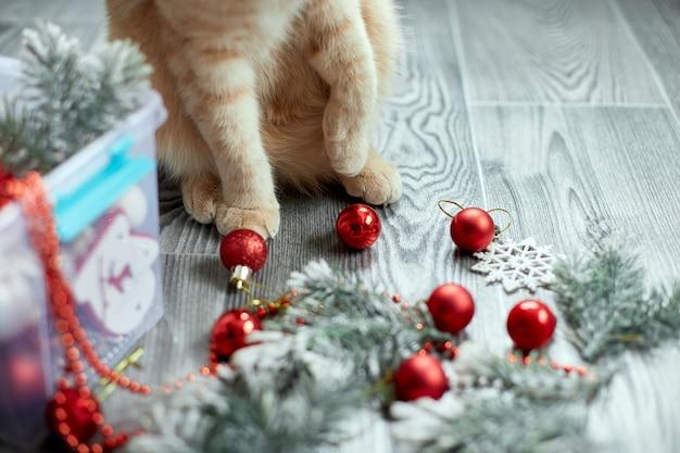 Una simpatica zampa di gatto britannico adorabile che gioca con le palle di natale a casa con gli ornamenti di natale