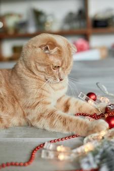Un simpatico adorabile gatto britannico che gioca con le palle di natale a casa, ornamenti di natale, gatto di natale, capodanno