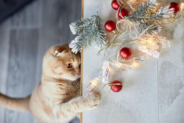Un simpatico adorabile gatto britannico che gioca con le palle di natale a casa, zampa sul tavolo con ornamenti natalizi, gatto di natale, capodanno, vista dall'alto, spazio per le copie.