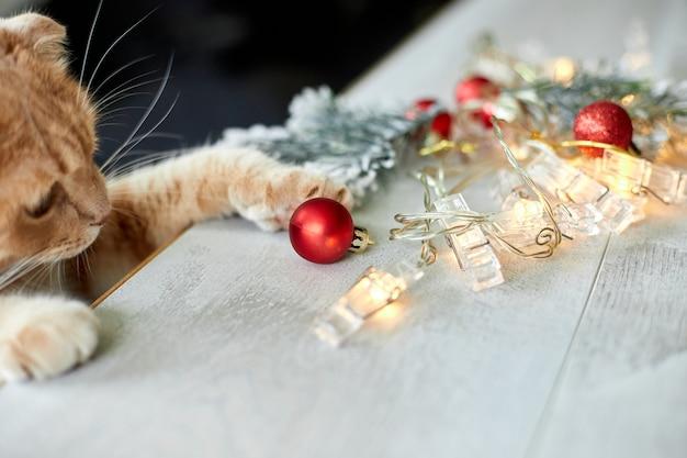 Un simpatico gatto britannico adorabile che gioca con le palle di natale a casa, zampa sul tavolo con ornamenti natalizi, gatto di natale, anno nuovo