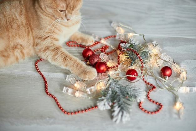 Un simpatico adorabile gatto britannico che gioca con le palle di natale a casa zampa sul tavolo con natale
