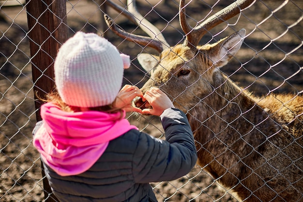 Un cervo adulto carino lecca la mano di una bambina, bambino, cervi che vivono in un campo naturale, zoo