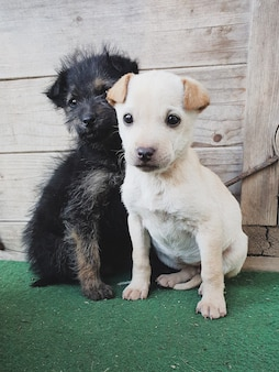 Simpatici cuccioli di animali, cucciolo bianco e nero
