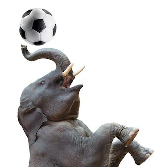 Elefante asiatico sveglio del bambino in azione di giocare a pallone da calcio isolato su bianco