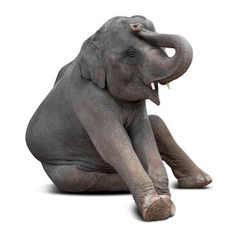 Elefante asiatico del bambino sveglio isolato su priorità bassa bianca con il percorso di residuo della potatura meccanica