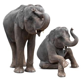 Elefante asiatico sveglio del bambino in varie azioni isolate su bianco con il percorso di residuo della potatura meccanica