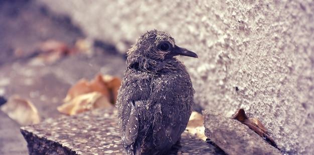 Simpatico uccellino seduto per terra