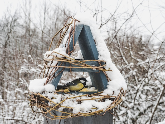 Simpatici, bellissimi uccelli in una mangiatoia di vimini. primo piano, all'aperto. luce del giorno. concetto di cura degli animali