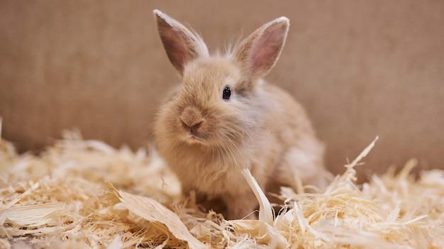 Simpatico bel coniglio nello zoo