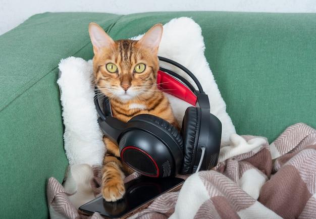 Simpatico gatto bengala che ascolta musica su un telefono cellulare con le cuffie. seduto sul divano. animali domestici in casa. guardando nella telecamera