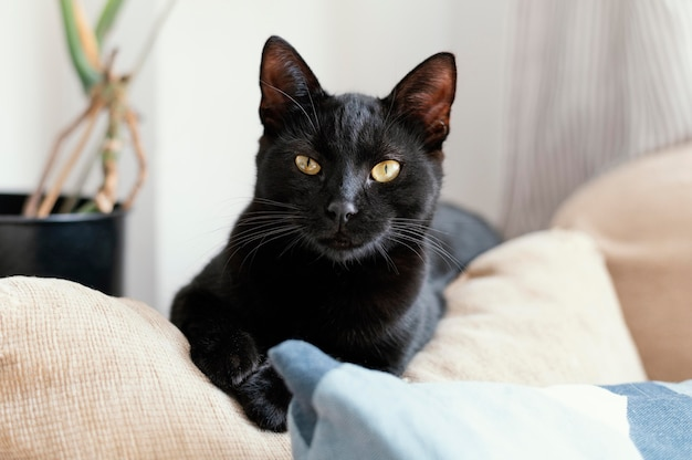 Gatto nero sveglio che pone sul divano
