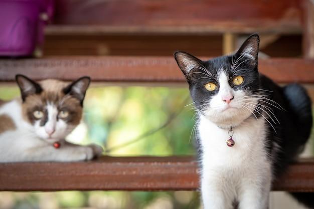 Gatto sveglio di colore bianco e nero che si trova alle scale di legno.