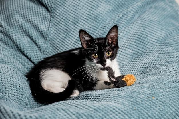 Un simpatico gattino bianco e nero con gli occhi gialli sul divano che gioca con i giocattoli