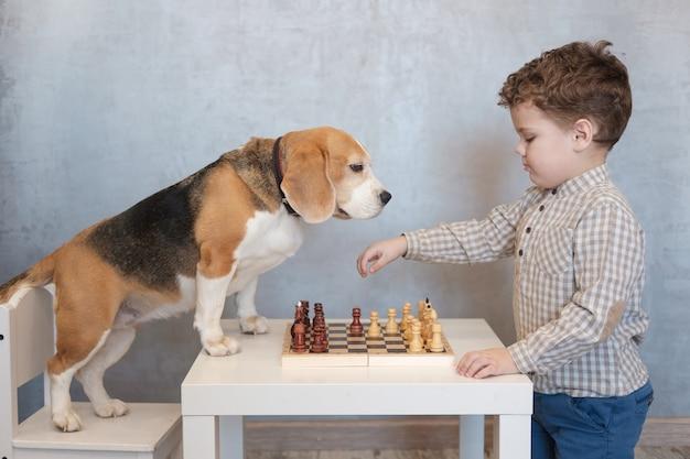 Ragazzo carino e divertente cane beagle che giocano a scacchi al tavolo in camera