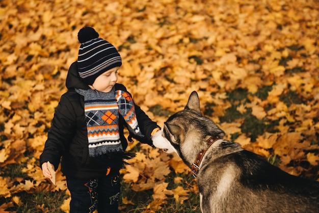 Ragazzo sveglio in foglie gialle del parco di autunno che gioca con il cane husky