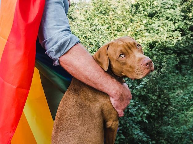 Simpatico cucciolo marrone con bandiera arcobaleno lgbt