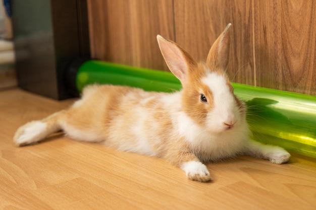 Simpatico coniglietto sul pavimento