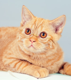 Simpatico gatto d'affari con gli occhiali